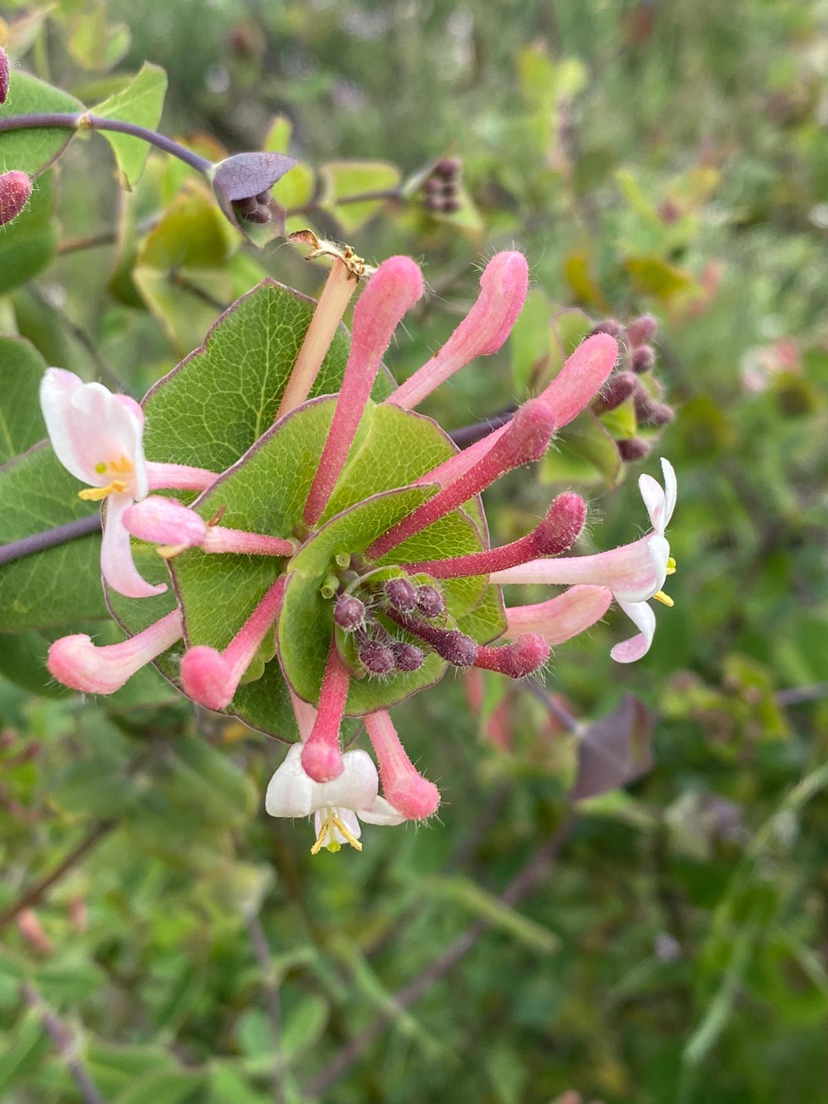 Fleur Louise
